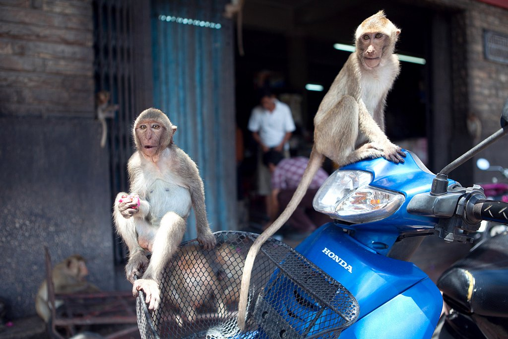 The City of Monkeys