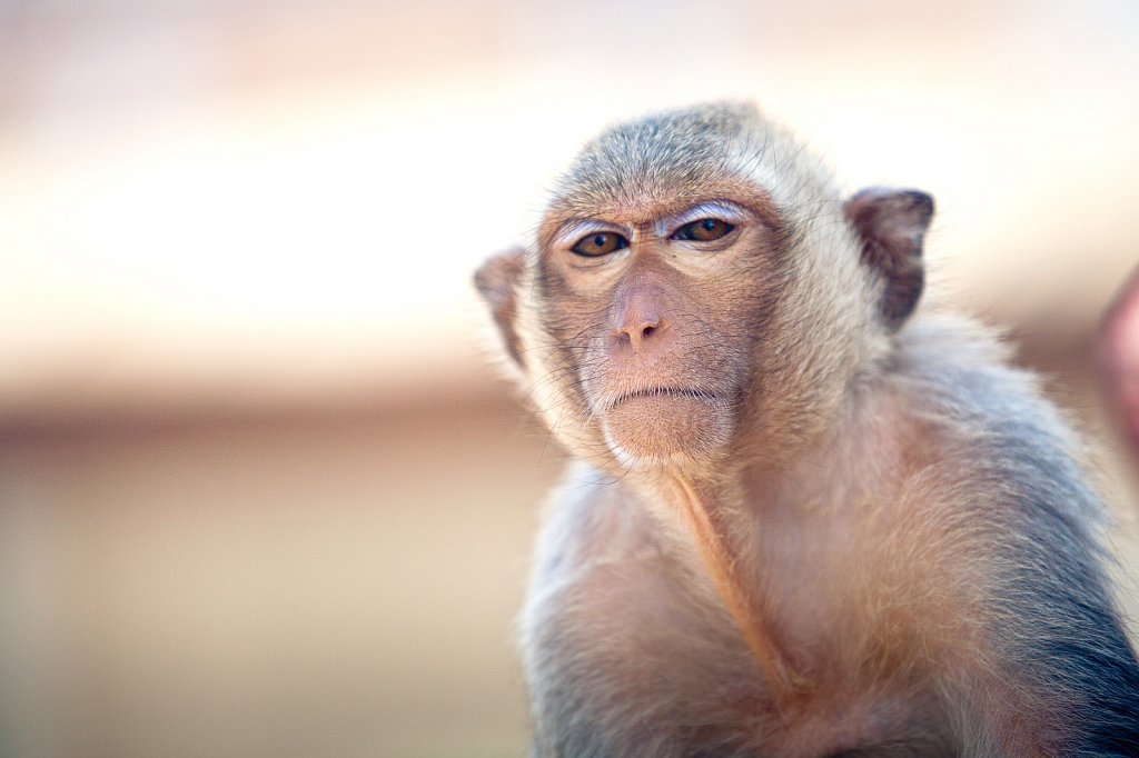 ลพบุรี  The City of Monkeys
